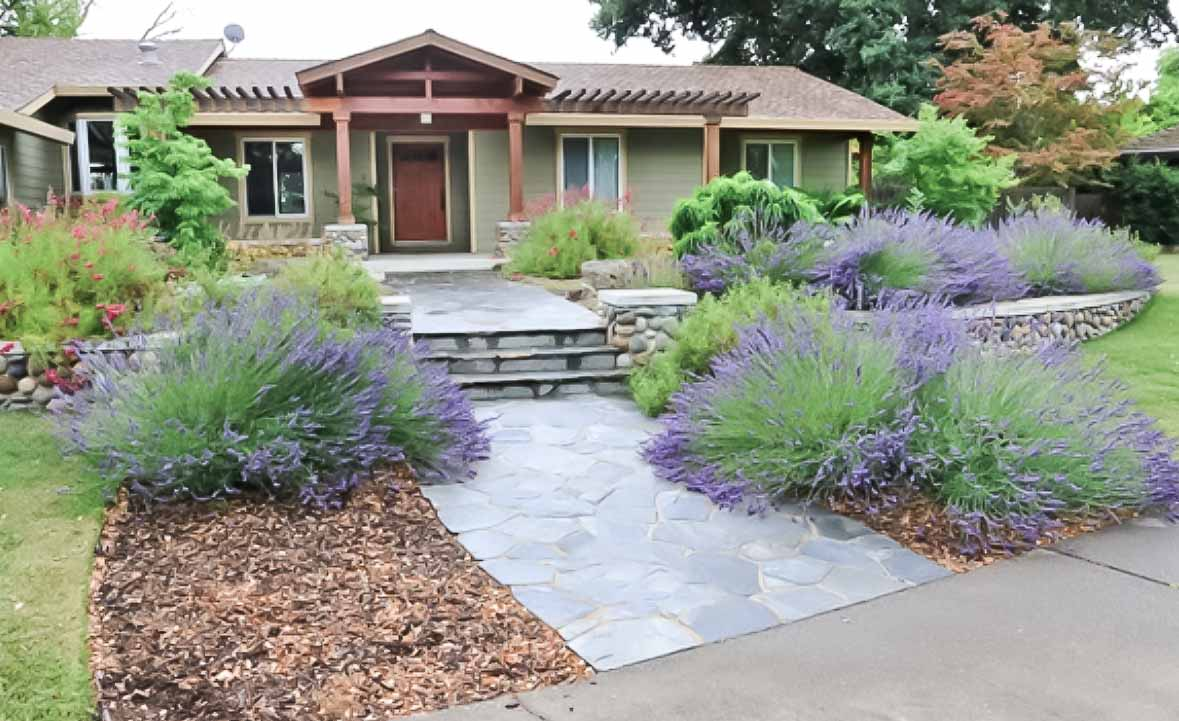 waterwise landscape design project